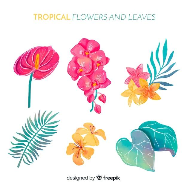 Aquarelles fleurs et feuilles tropicales Vecteur gratuit