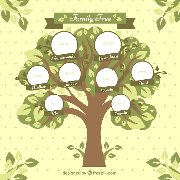 arbre g n alogique avec des cercles et feuilles d coratives t l charger des vecteurs gratuitement. Black Bedroom Furniture Sets. Home Design Ideas