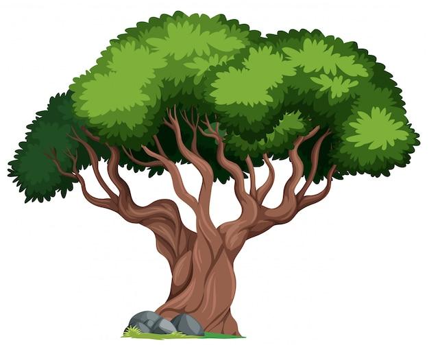Un arbre isolé sur fond blanc Vecteur gratuit