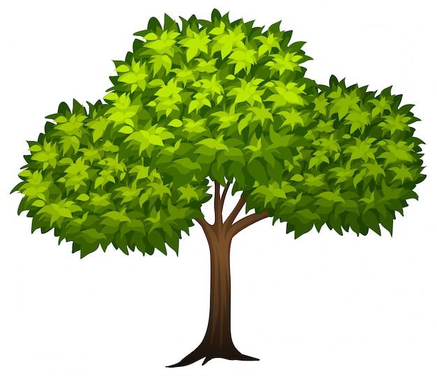 Un arbre vert Vecteur gratuit