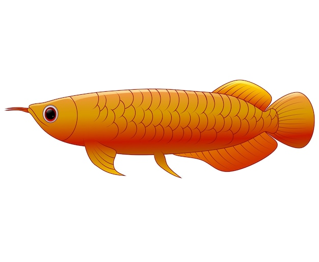 Arowana poisson sur fond blanc Vecteur Premium