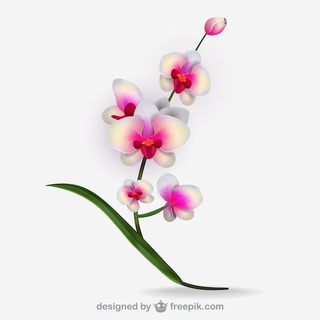 Artistique vecteur d'orchidée blanche Vecteur gratuit