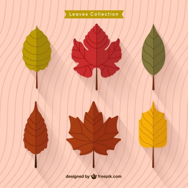 Autumn leaves collection flat Vecteur gratuit