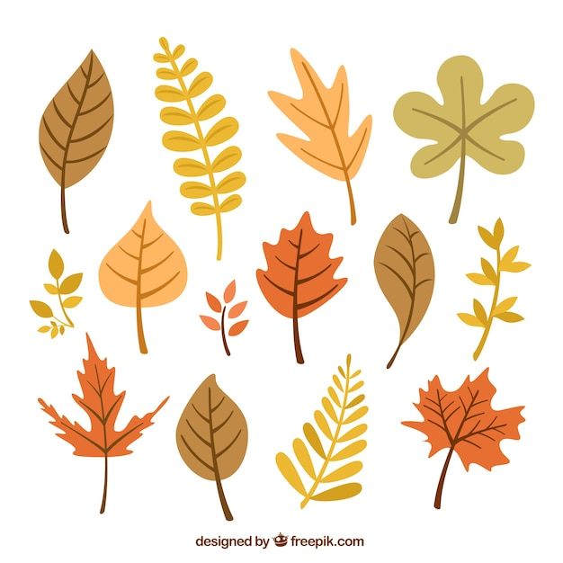 Autumnal leaves collection Vecteur gratuit