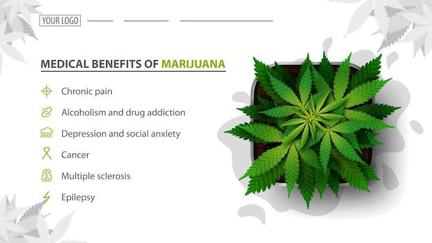 Avantages Médicaux De La Marijuana, Baner Blanche Pour Site Web Avec Buisson De Cannabis Dans Un Pot, Vue De Dessus. Avantages Des Utilisations De La Marijuana Médicale Vecteur Premium