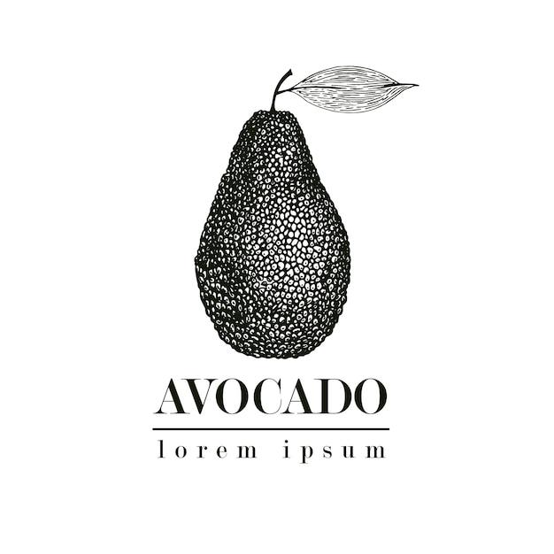 Avocat dessiné à la main de vecteur. illustration de style vintage de fruits d'été tropical. dessin alimentaire détaillé. idéal pour étiquette, affiche, impression. modèle de logo. Vecteur Premium