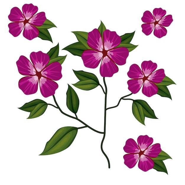 Azalée Fleur Plante En Fond Blanc Vecteur Premium