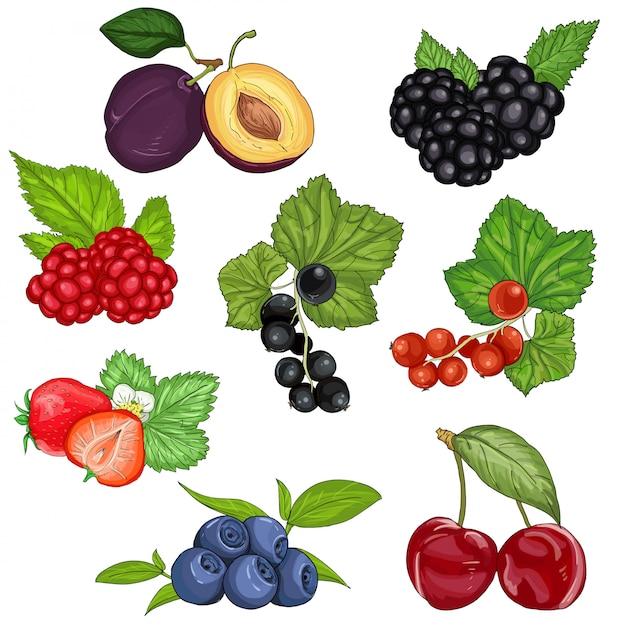 Baies Sauvages Et Ensemble De Fruits Vecteur Premium