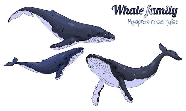 Baleines à bosse. Vecteur Premium