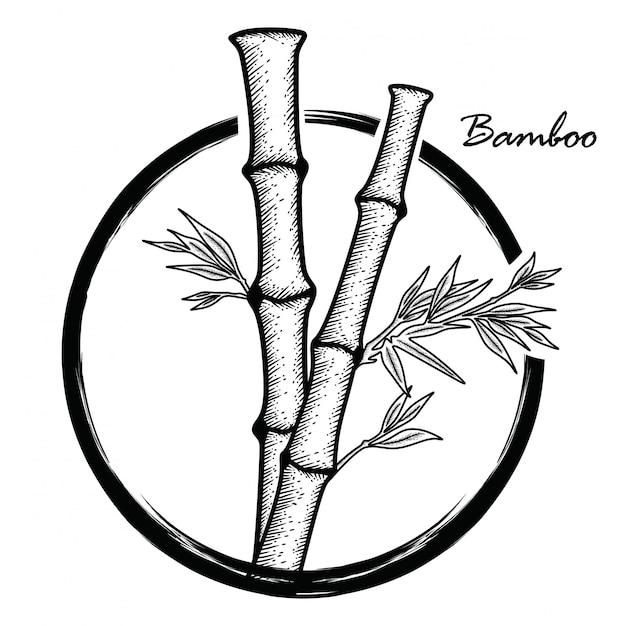 Bambou dessiné à la main Vecteur Premium