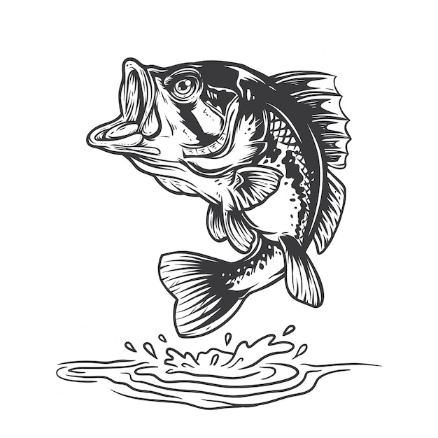 Bass fish Vecteur Premium