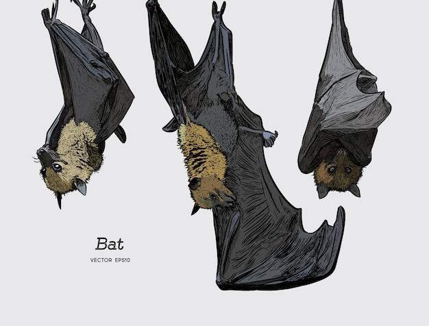 Bat vecteur d'illustration. Vecteur Premium