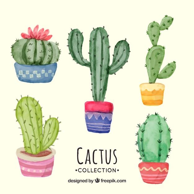 Beau paquet de cactus aquarelle Vecteur gratuit