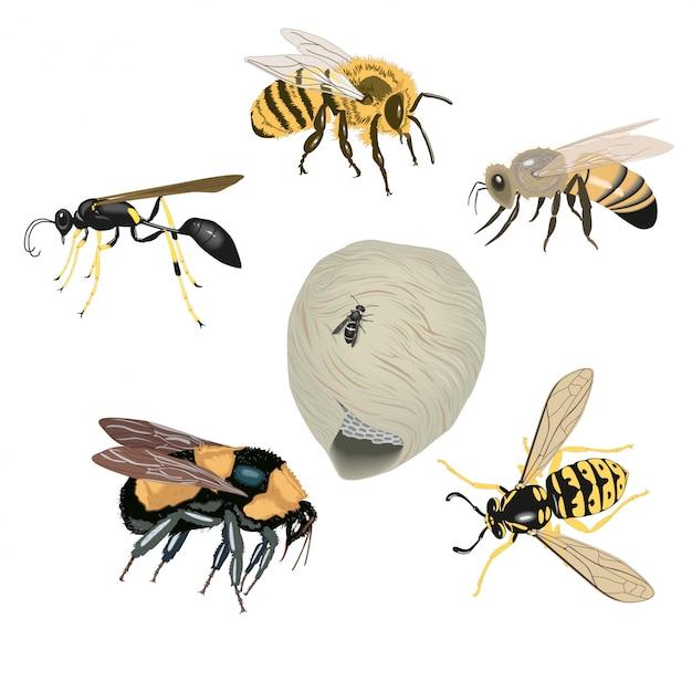 Beaucoup d'abeilles Vecteur Premium