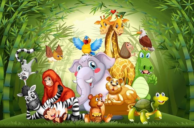 Beaucoup D'animaux Mignons Dans La Forêt De Bambous Vecteur Premium