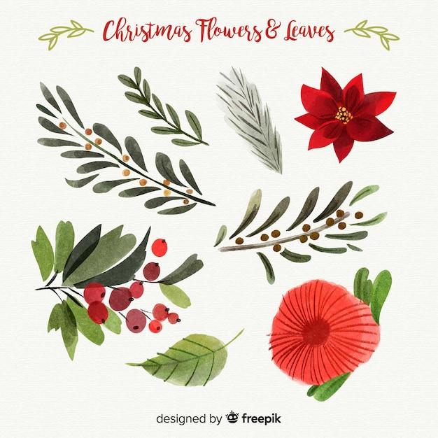 Belle collection de fleurs et de feuilles de Noël Vecteur gratuit