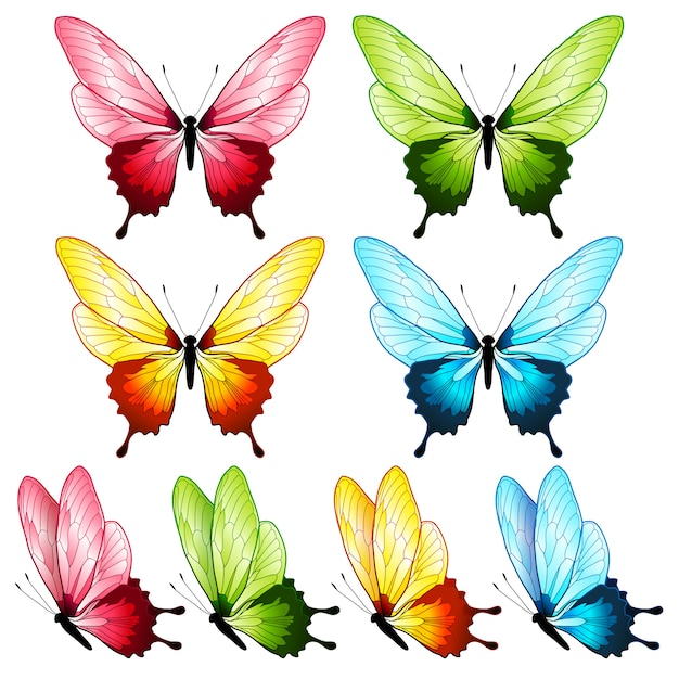 Belle collection de papillons, quatre couleurs Vecteur Premium
