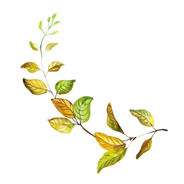 Belle feuille d'automne aquarelle Vecteur gratuit