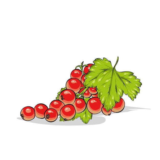 Belle Groseille Mûre. Baies Et Fruits, été. Vecteur Premium