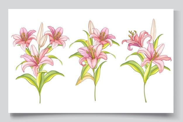 Belle Illustration De Fleurs De Lys Dessinés à La Main Vecteur gratuit