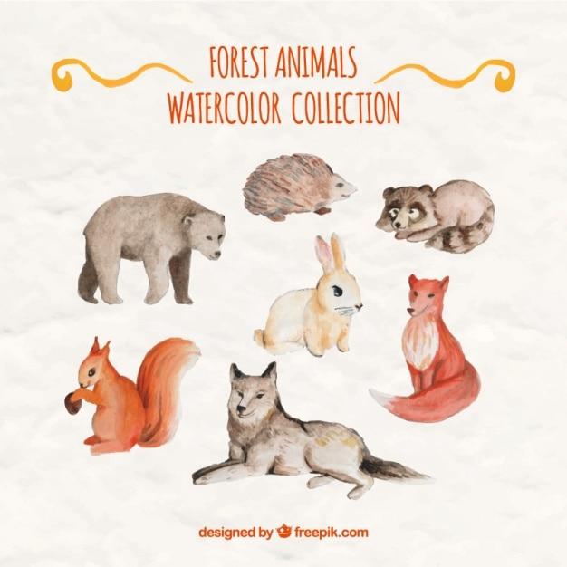 Belles animaux de la forêt d'aquarelle Vecteur gratuit