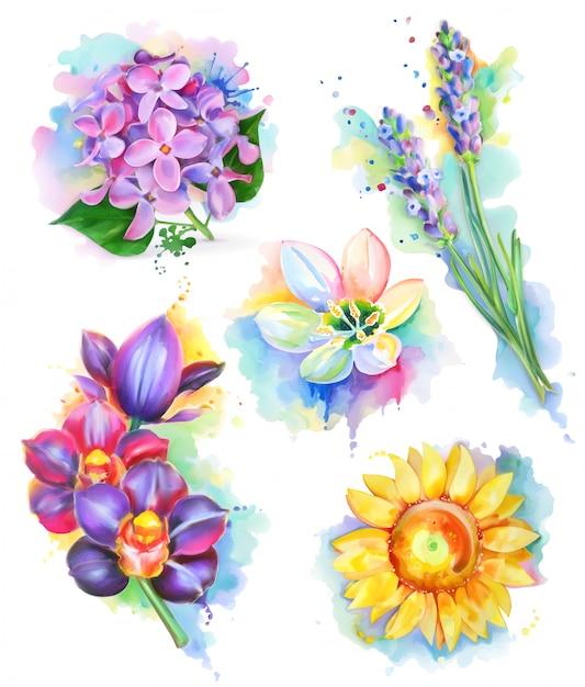 Belles Fleurs, Aquarelle, Ensemble De Maille Vecteur Premium