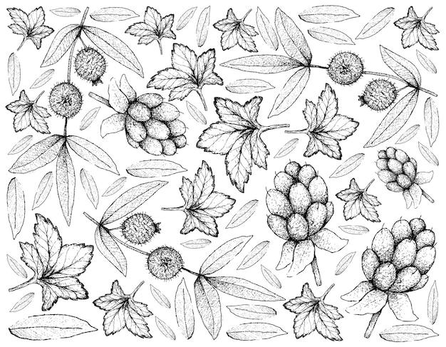 Berry Fruits Illustration Wallpaper De Croquis Dessinés à La Main Vecteur Premium