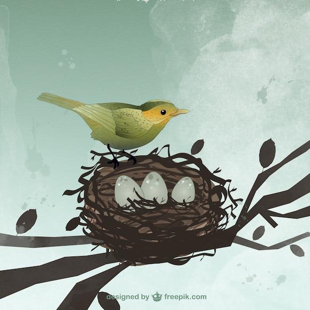 Bird Et Nid Vecteur Premium