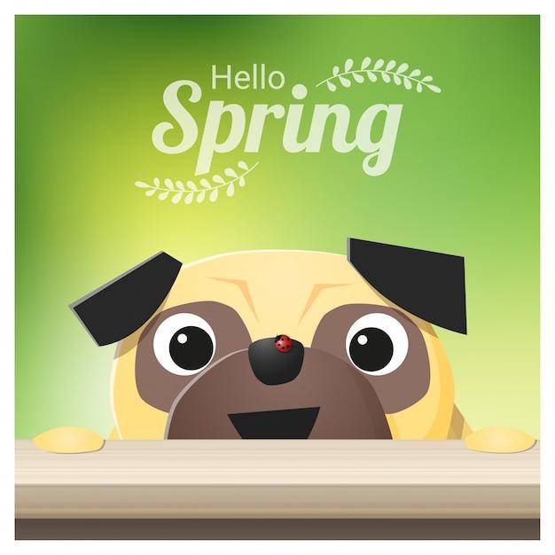 Bonjour fond de saison de printemps avec chien carlin Vecteur Premium