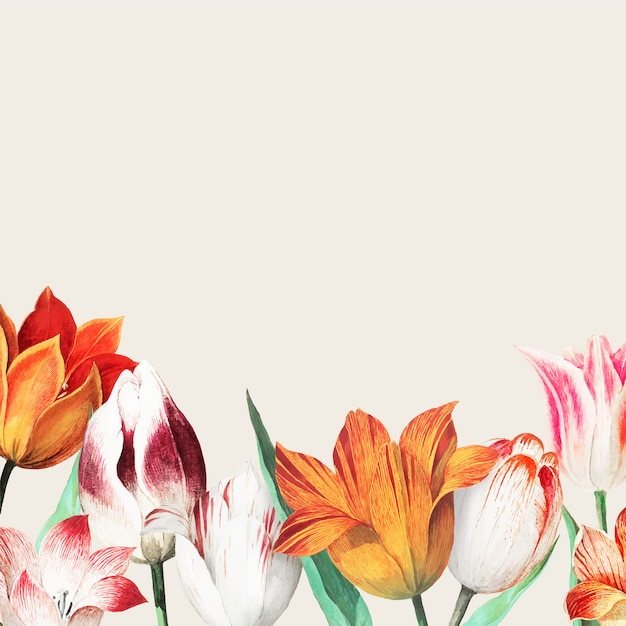 Bordure de champ de tulipes Vecteur gratuit