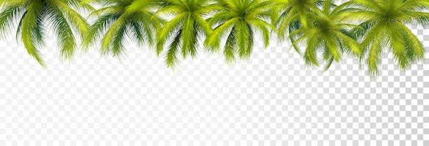 Bordure de feuilles de palmier Vecteur Premium