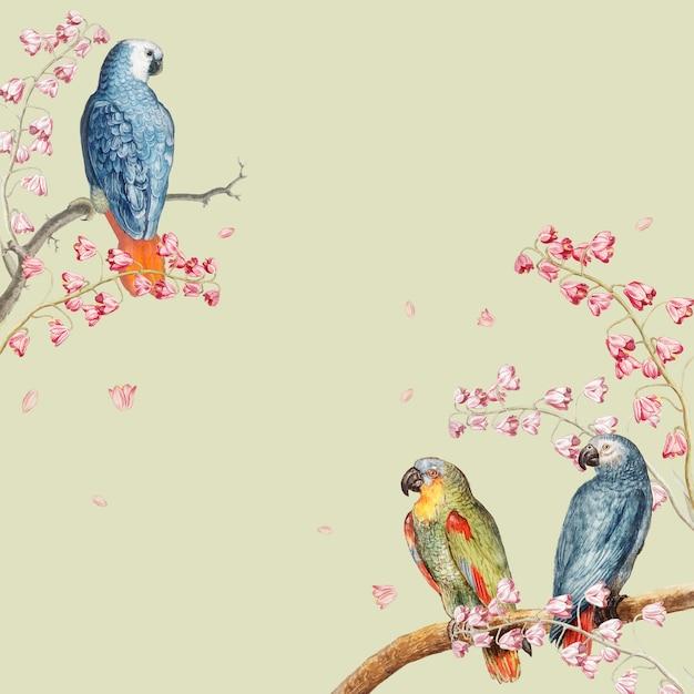 Bordure de maquette de perroquets Vecteur gratuit