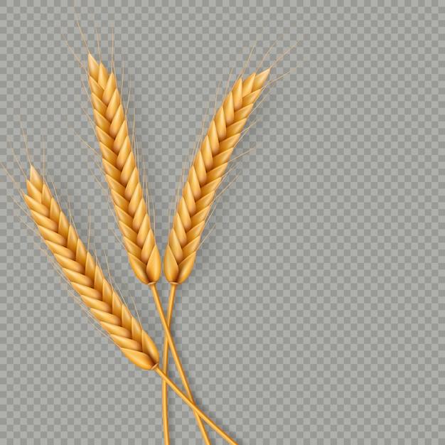 Bouquet D'épis De Blé, Illustration Réaliste De Grains Entiers Séchés Vecteur Premium