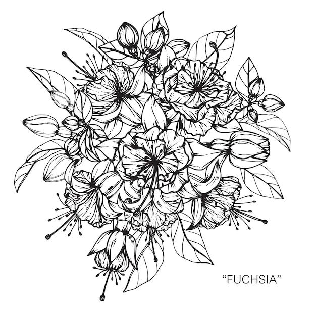 Bouquet de fuchsia fleur dessin illustration.   Télécharger des Vecteurs Premium