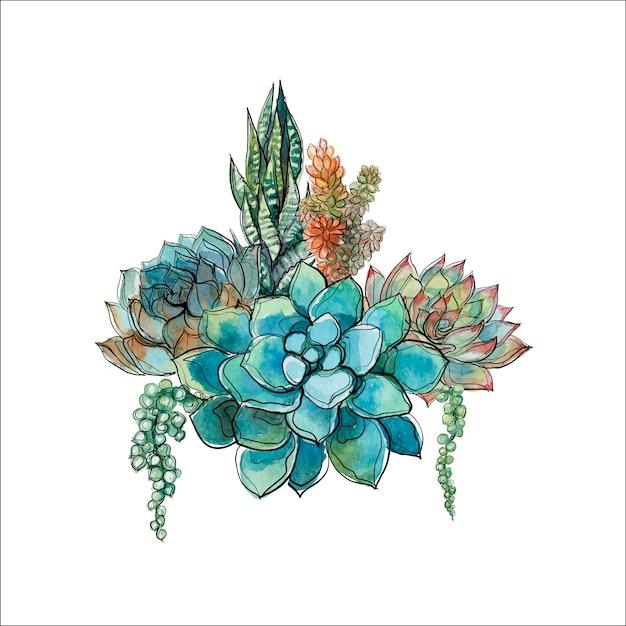 Bouquet de plantes succulentes Vecteur Premium