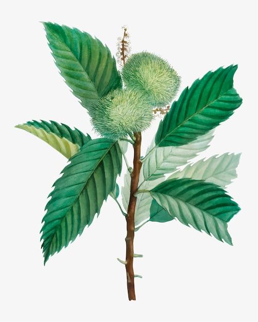 Branche d'arbre Vecteur gratuit