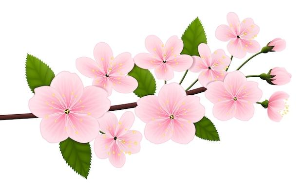 Branche de cerisier en fleurs. Vecteur Premium