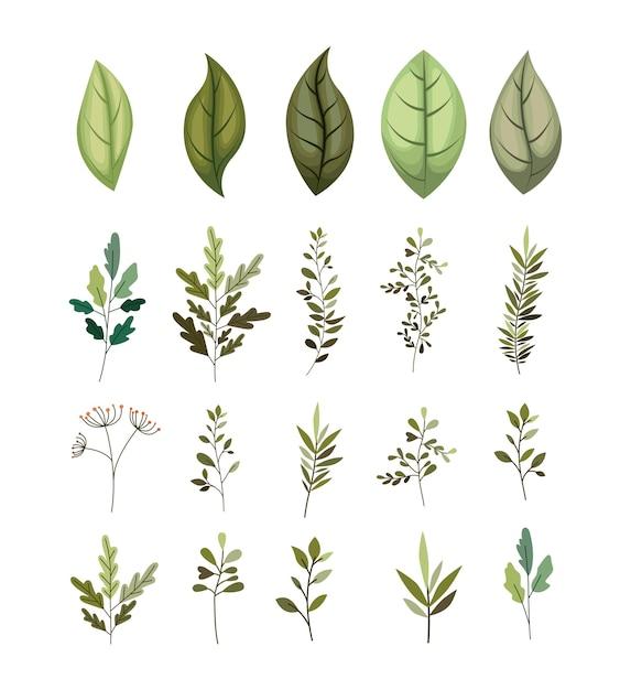 Branche avec feuilles icônes décoratives Vecteur Premium