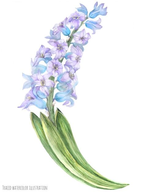 Branche de jacinthe bleu violet Vecteur Premium