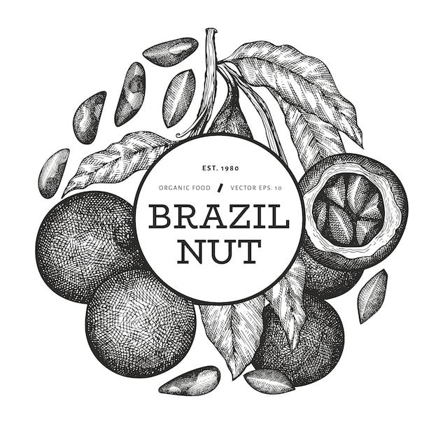 Branche De Noix Brésilienne Dessinée à La Main Et Conception De Noyaux Avec Illustration Botanique De Style Gravé Vecteur Premium