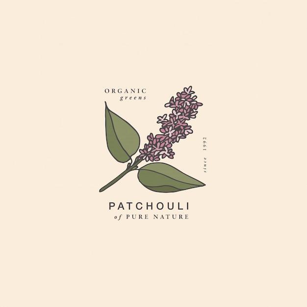 Branche De Patchouli Illustration - Style Vintage Gravé. Composition Du Logo Dans Un Style Botanique Rétro. Vecteur Premium