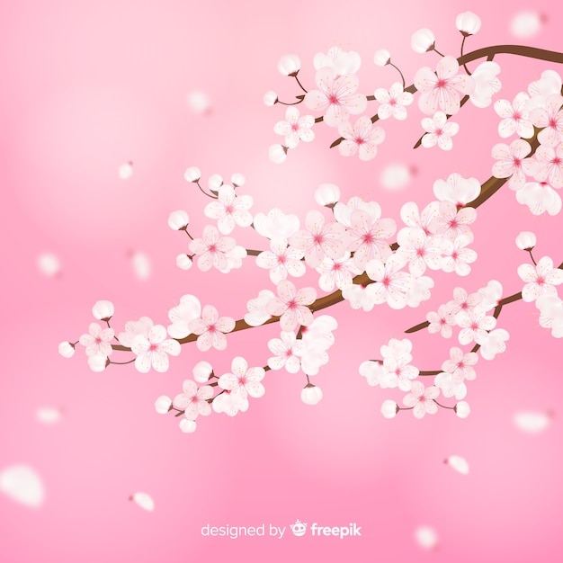 Branche Réaliste De Fleurs De Cerisier Vecteur gratuit