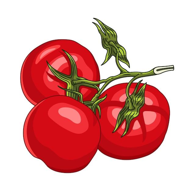 Branche avec trois tomates mûres Vecteur Premium