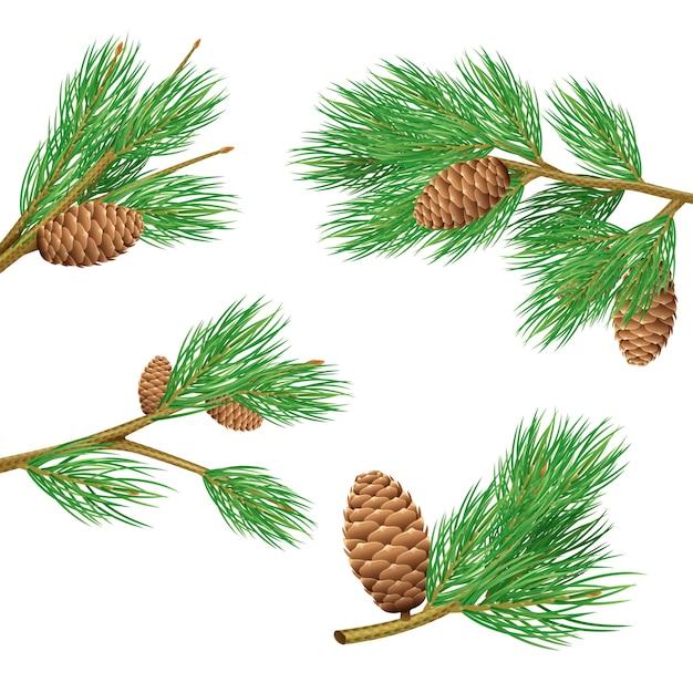 Branches de pin vert avec des cônes ensemble réaliste pour illustration vectorielle de décoration isolé Vecteur gratuit