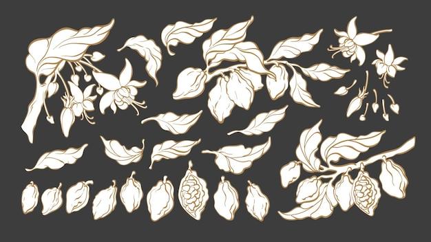 Cacao Silhouette Set Croquis Botanique De L'isolat Du Groupe De Fleurs De Feuilles De Fruits Haricots Vecteur Premium