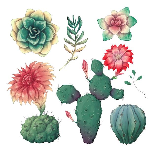 Cactus colorés dessinés à la main et ensemble succulent. Vecteur Premium