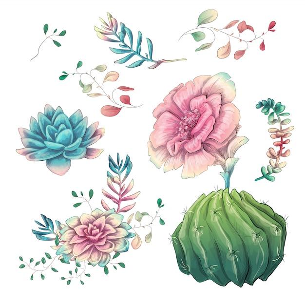 Cactus dessinés à la main sur un fond blanc Vecteur Premium
