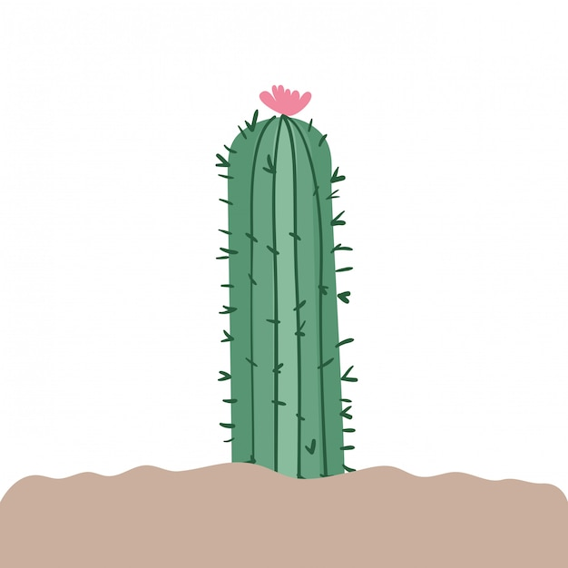 Cactus en paysage isolé Vecteur Premium
