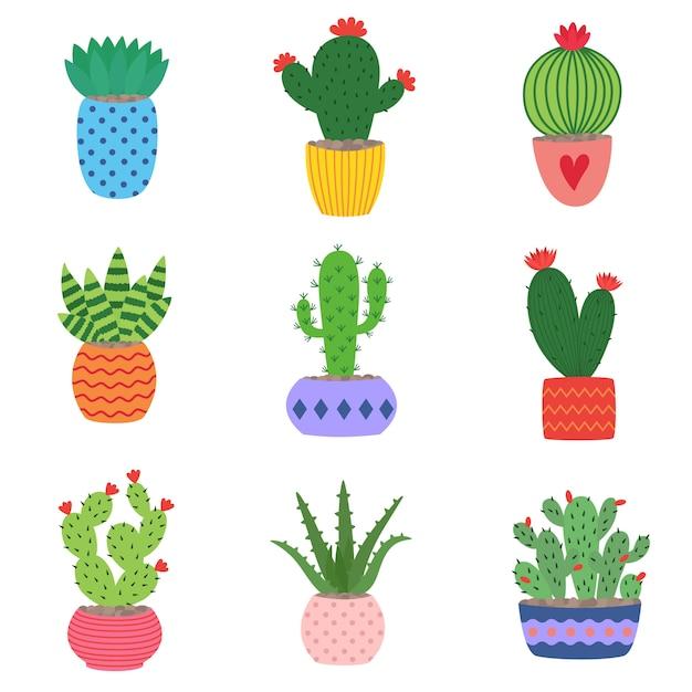 Cactus et plantes succulentes en pots Vecteur Premium