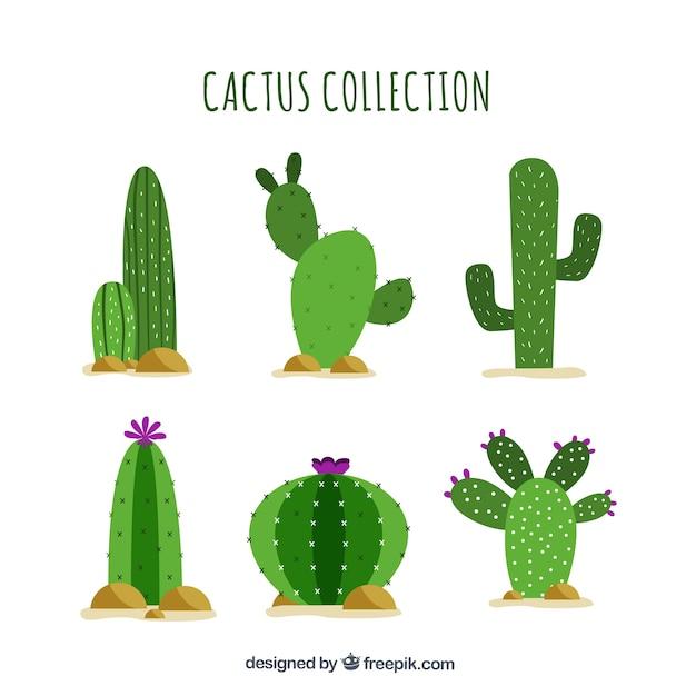 Cactus plat avec style drôle Vecteur gratuit